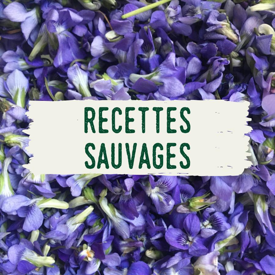 recettes plantes sauvages