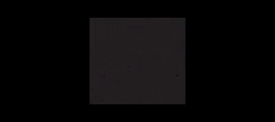 Illustration- champignons