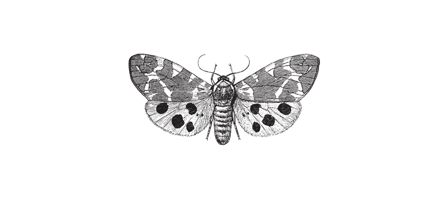 Illustration - papillon