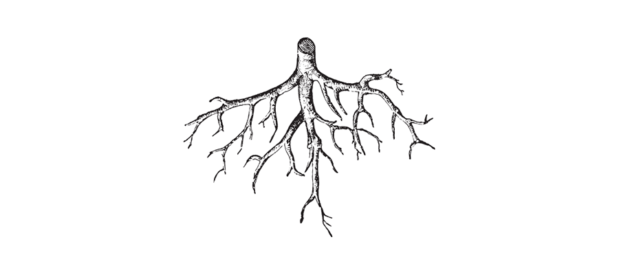 Illsutartions -racines