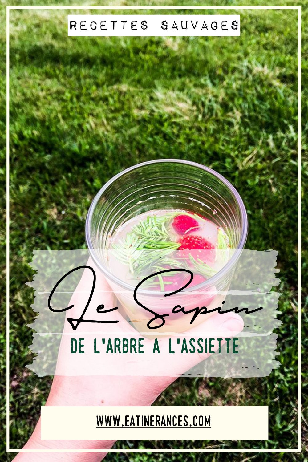 Sapin-comestible-recettes